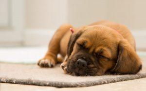 hoe-werkt-een-hondenverzekering-eigenlijk