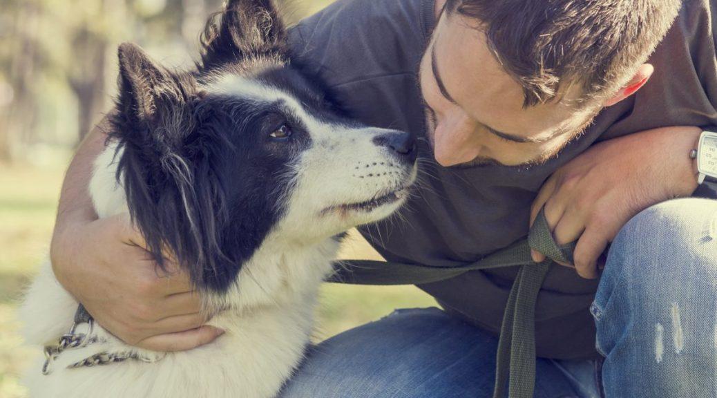 nederlander-niet-bewust-van-hondenverzekering