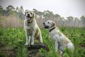 zindelijkheid bij honden en een hondenbench